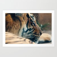 tigger Art Prints featuring Tigger by Josef Roesler