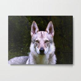 Czech Wolfdog Digit. Edition Metal Print