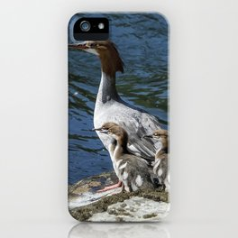 Female Merganser with Her Young iPhone Case