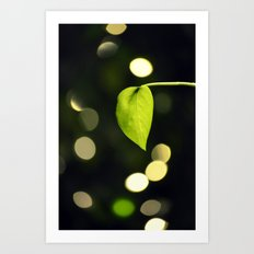 Leaf & light Art Print