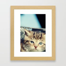 CAT, KATZE Framed Art Print
