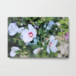 Naturally Beautiful - White Hibiscus Metal Print