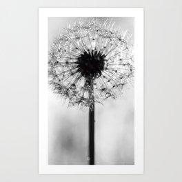 dandelion bw IV Art Print