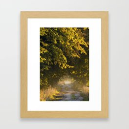 Alley of lime trees in Autumn #2 Framed Art Print