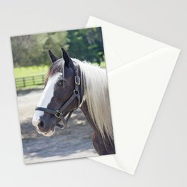Gypsy Vanner Profile Stationery Cards