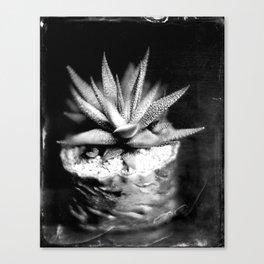 Haworthia Succulent Tintype Canvas Print