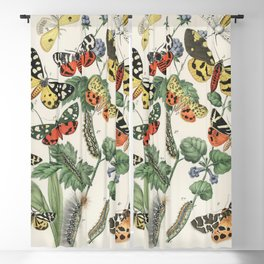 Illustrations from the book European Butterflies and Moths by William Forsell Kirby (1882) a kaleidoscope of fluttering butterflies and caterpillars Blackout Curtain