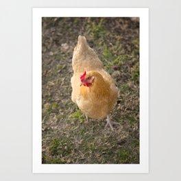 Chicken! Art Print
