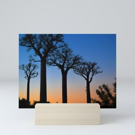 Baobab Trees in Madagascar Mini Art Print