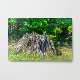 Tree Stump Metal Print
