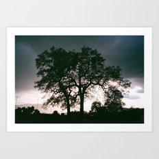 Sequoia Oak Art Print