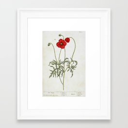"""Red Poppy by Elizabeth Blackwell from """"A Curious Herbal,"""" 1737 (benefits The Nature Conservancy) Framed Art Print"""