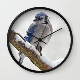 Puffed Feathers Blue Jay Wall Clock