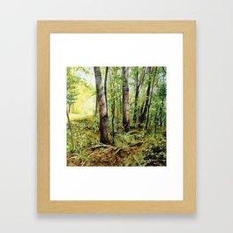 Forest Woods Vermont Landscape Framed Art Print