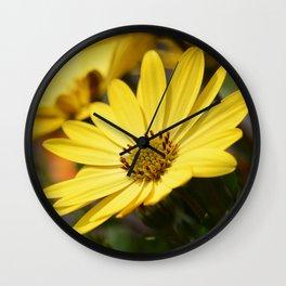 Yellow African daisy Wall Clock