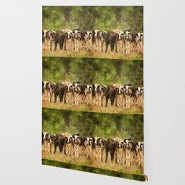 Curious Cows Wallpaper