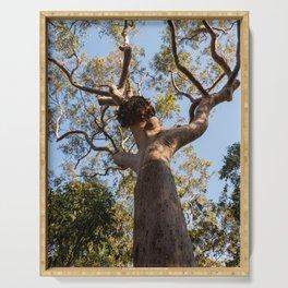 Scribbly Gum Tree, Muogamarra Reserve, Sydney Serving Tray