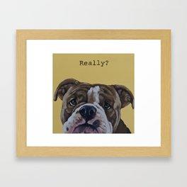 English Bulldog - Really? Framed Art Print