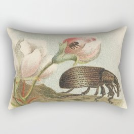 Antique Lithograph of Apple Blossom Weevil Rectangular Pillow