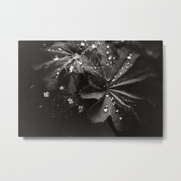 Secret Garden ~ No.10 Metal Print