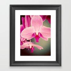 Orchid Love Framed Art Print
