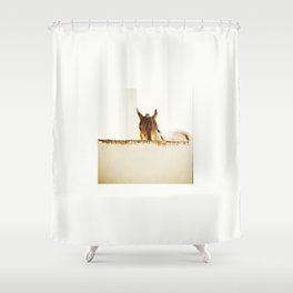 """HORSE PHOTOGRAPH """"WATCHING YOU"""" Shower Curtain"""
