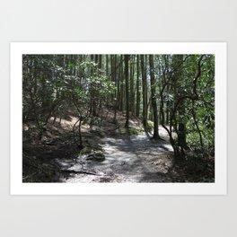 Abrams Falls Trail Art Print