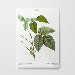 Poison ivy (Toxicodendron radicans) from Traité des Arbres et Arbustes que l'on cultive en France en Metal Print