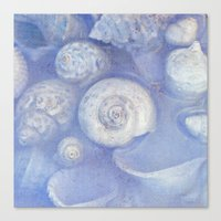 shells Canvas Prints featuring shells by Claudia Drossert