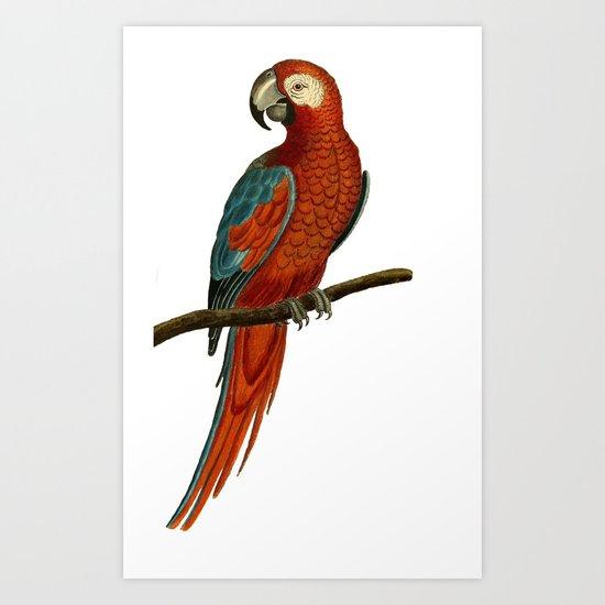 Parrot perroquet Art Print
