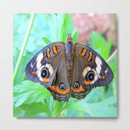 Un-Common Buckeye Moth Metal Print
