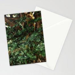 Needing Winter Stationery Cards