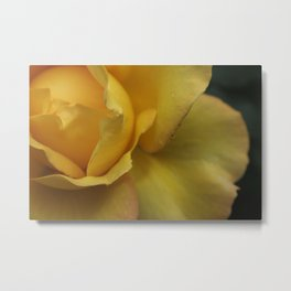 Yellow rose after the rain. Metal Print