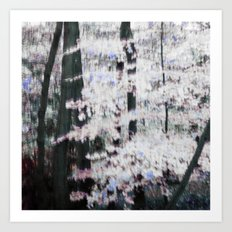 WHITE WOODS Art Print