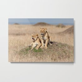 Young lions Metal Print
