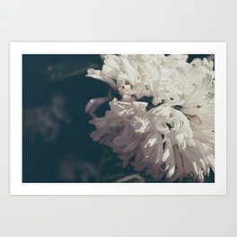 Graceful Hyacinth Art Print