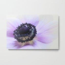 Violet Anemone Metal Print