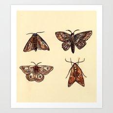 Moths. Art Print