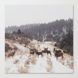 Winter Deer Herd Canvas Print