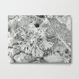 Beautiful coralline algae Metal Print
