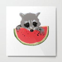 Raccoon Eats Watermelon  Metal Print