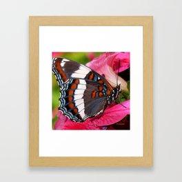Butterfly IV Framed Art Print
