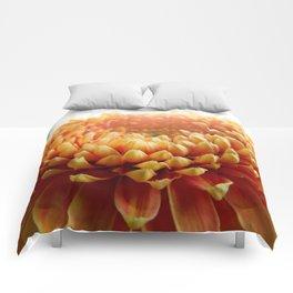 Orange Germini Close Up 5 Comforters