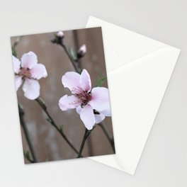 Peach Blossoms Stationery Cards