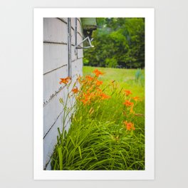 Farmhouse Lilies, North Dakota 5 Art Print