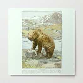 The Alaskan Brown Bear Metal Print