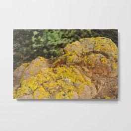 AYM - Australian Yellow Moss Metal Print