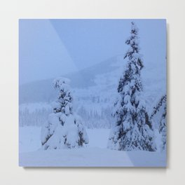 Snow Laden Evergreen Trees Metal Print