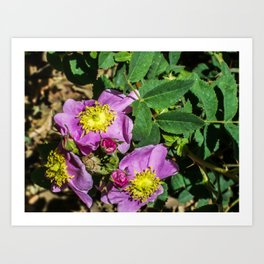 purple flowers Art Print