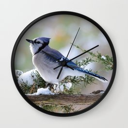 Look Skyward Blue Jay Wall Clock